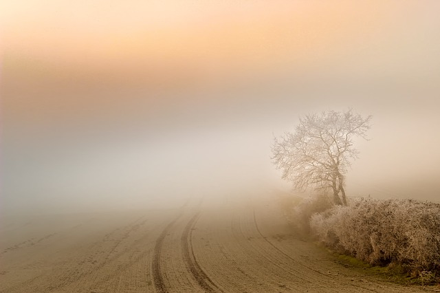 Fog-people ~ A short story by Susan Anwin