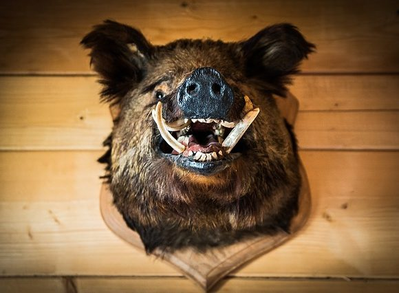 The Boar's Head ~ A short story by Susan Anwin