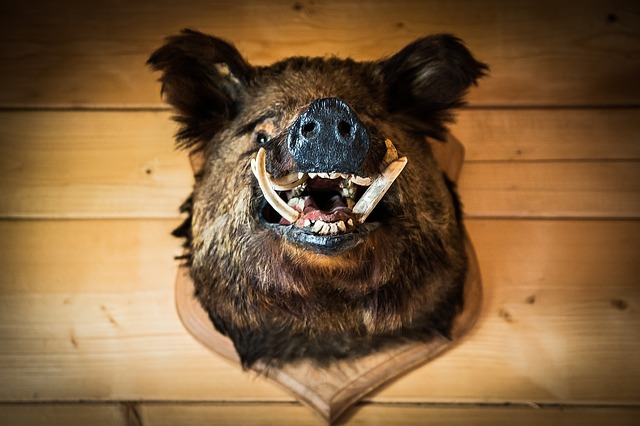 The Boar's Head ~ A short story by Susan Anwin