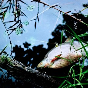 You'll Die as Fish ~ A short story by Susan Anwin